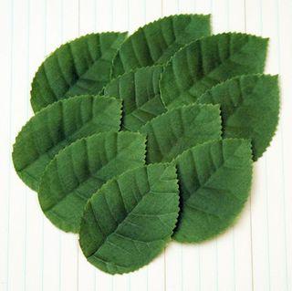 TK2104 - Leaves - Medium