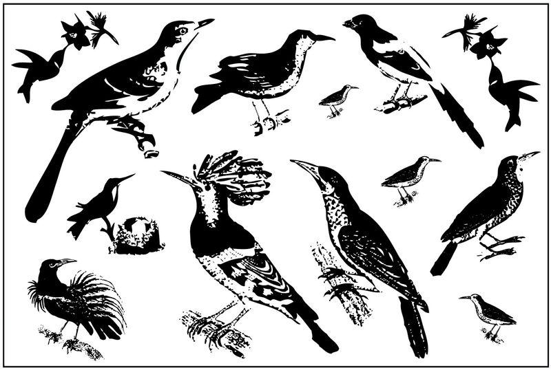 Ornate birds